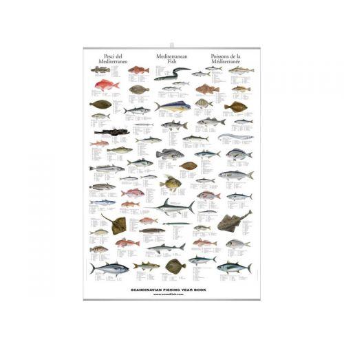 poster  poissons méditerranée