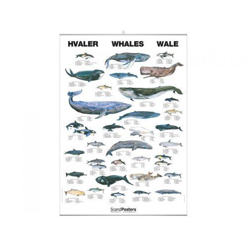 poster baleines